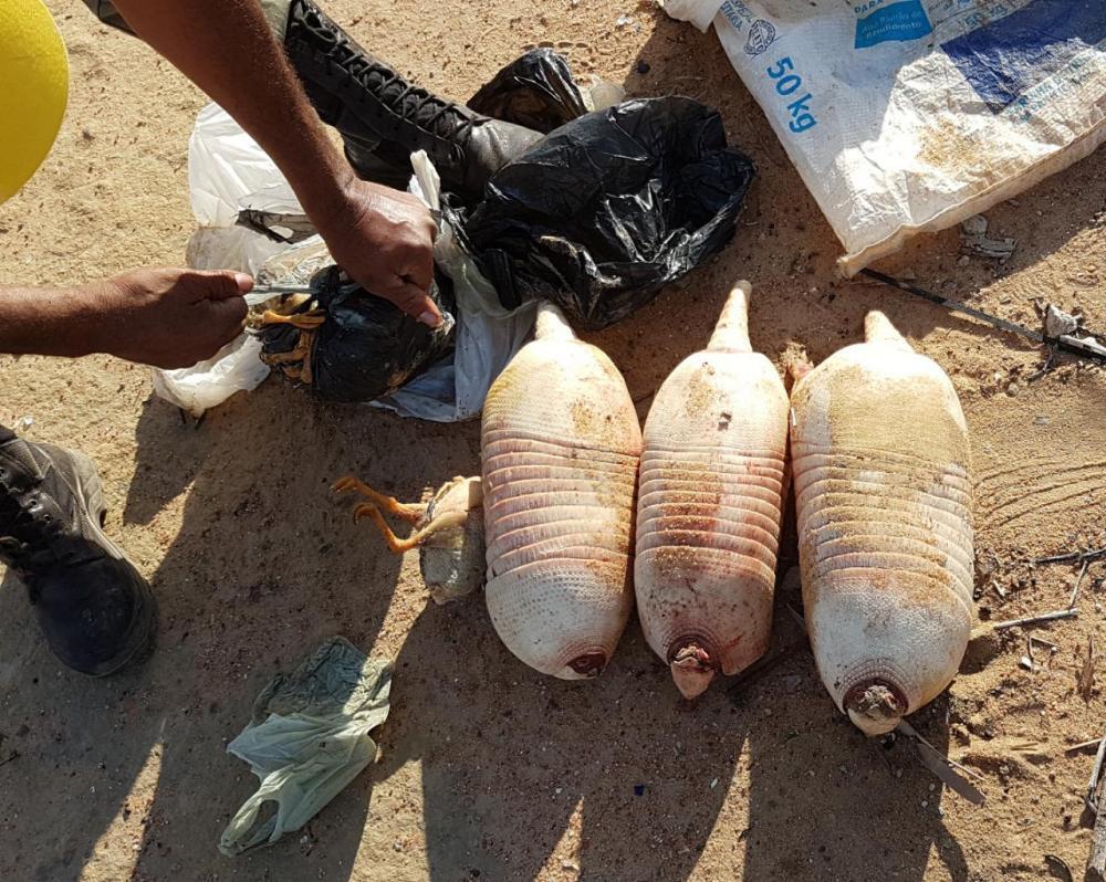 Caça de animais no Parque Serra da Capivara foge do controle (Foto: divulgação)