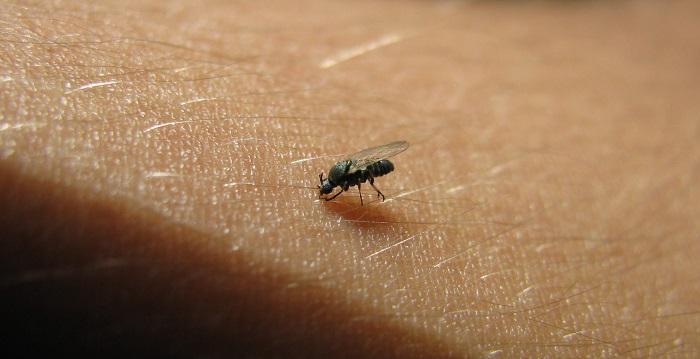 Lixo e matéria orgânica são substratos para a reprodução do inseto - Foto: Stock