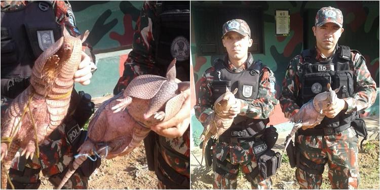 Animais apreendidos serão libertados pela Companhia Militar (Foto: Divulgação/PM-PI)