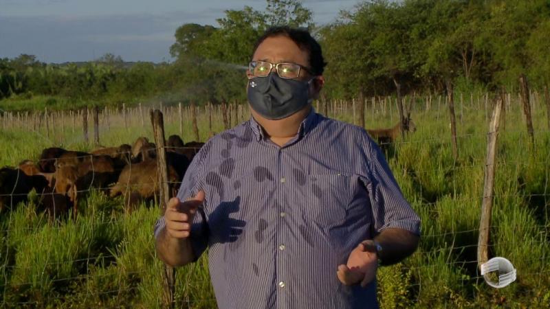 Embrapa desenvolve sistema de produção para ovinos